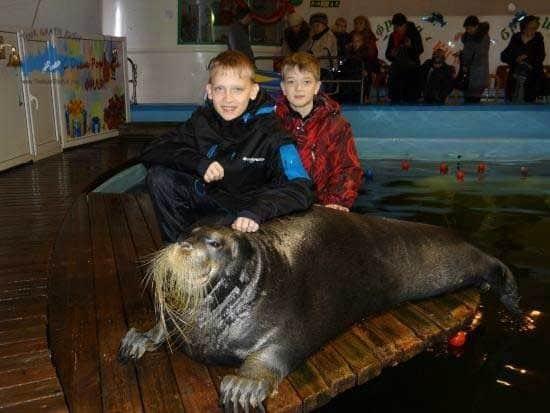 Visitar el Oceanario de Murmansk; Recorrer el Oceanario de Murmansk; Que ver en el Oceanario de Murmansk.
