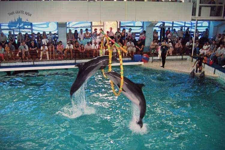 Explorar el delfinario Gelendzhik en Rusia; Que ver en el delfinario Gelendzhik en Rusia; Visitar el delfinario Gelendzhik en Rusia