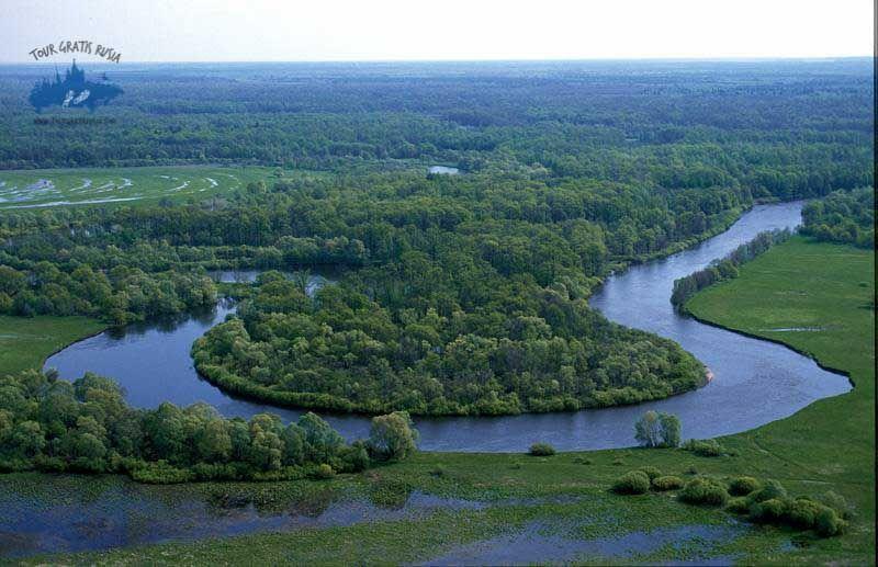 Visitar el Bosque de Briansk